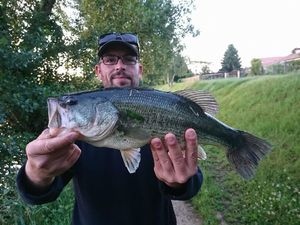 Largemouth Bass — Ludo Lefou