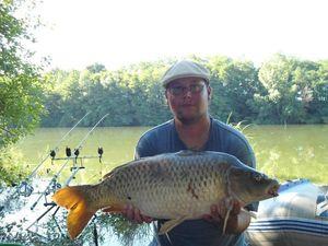 Common Carp — Tony Beaudoin