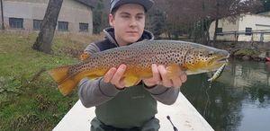 Brown Trout — Paul FishOndor