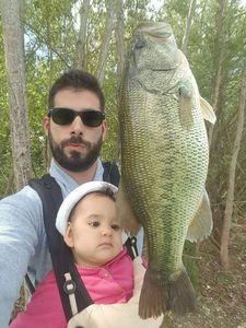 Largemouth Bass — Julien  DE LA VEGA