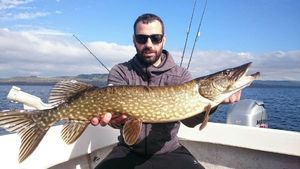 Northern Pike — Pascal Antona