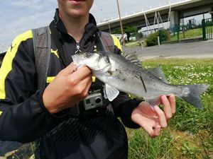 European Bass — Jeremy  Lepiller