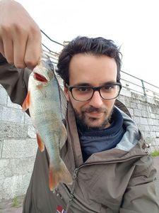 European Perch — Gauthier Delaite