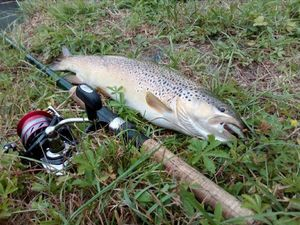 Brown Trout — Teddy Marrot