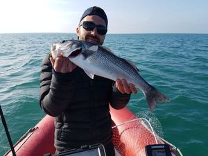 European Bass — Alan Lhotellier