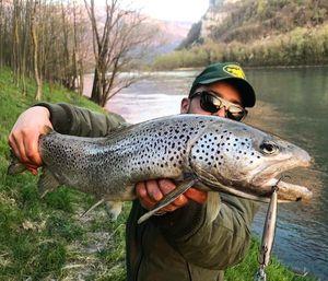 Brown Trout — Nicolas Sdc fishing