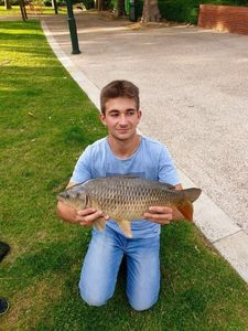 Common Carp — Charles Gille