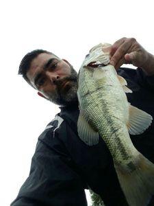 Largemouth Bass — Anthony Bonneau