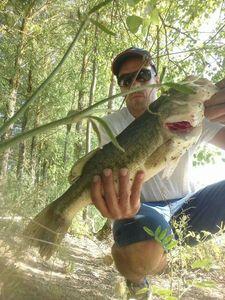 Largemouth Bass — Guillaume Fishbreizh