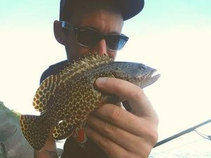 Honeycomb Grouper — Mathias Larrieu