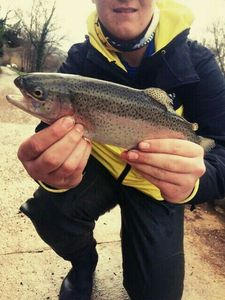 Rainbow Trout — Mathis Sebe