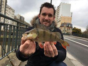European Perch — Père et Fish