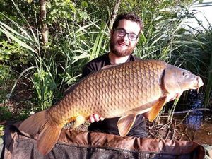 Common Carp — Guillaume Brunet