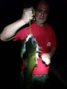 Channel Catfish — Anthony Pitts