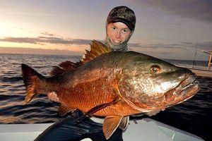 African Red Snapper — Thibault Noesser