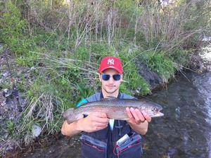 Rainbow Trout — Florentin Lehmann