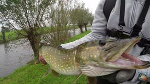 Northern Pike — Fishtique Lan