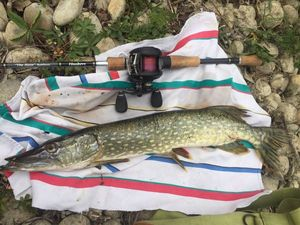 Northern Pike — Louis Ducrot