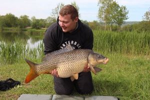 Common Carp — Paul Reder