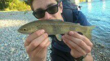 Brown Trout — Bryan Ouvrard