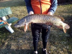 Northern Pike — Theo Regnier