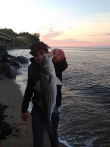 Striped Bass (Landlocked) — Sacha Bosman Fishing