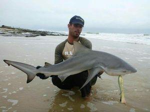 Bull Shark — Julien  DE LA VEGA