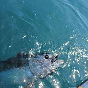 Southern Bluefin Tuna — Jibril Kherraz
