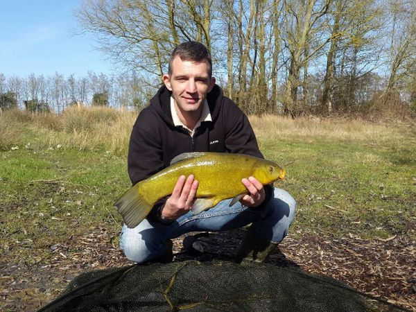 Tench by Jonathan Maire | 0