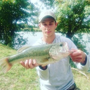 Largemouth Bass — Dylan Majou