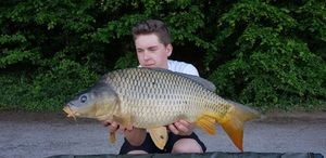 Common Carp — Paul FishOndor