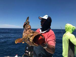 Orange Spotted Grouper — Chakib Abbadi