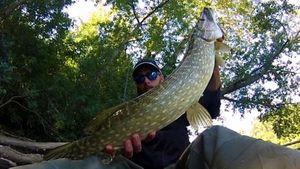 Northern Pike — Myk Fishingddict