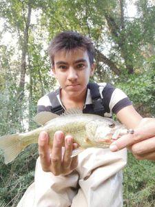 Largemouth Bass — Tom Engels