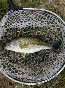 Smallmouth Bass — Florian Vouaux