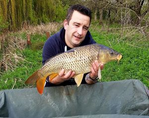 Common Carp — Stellio Desgrouas