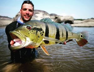 Peacock Bass (Tucunaré Temensis) — Nicolas Xmylife Rodmaps