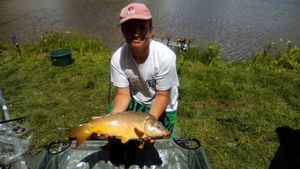 Common Carp — Jules Calloire
