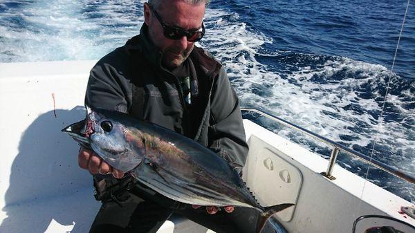 Skipjack Tuna by Julien  Yriarte | 0