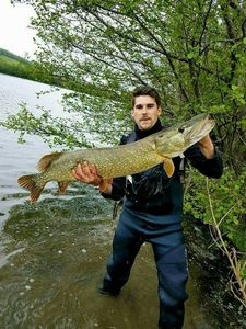 Northern Pike — Romain Dumaitre