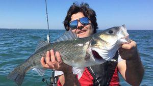 European Bass — Thibaut Lefort