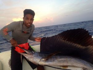 Atlantic Sailfish — brice dmx