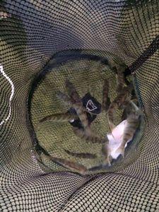 European Perch — Esoxgab Fishing