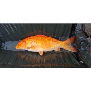Koï Fish — Paul FishOndor
