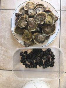 European Flat Oyster — Matthieu Cormier