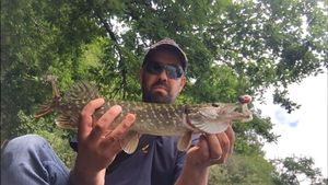 Northern Pike — Ludovic Gibelin
