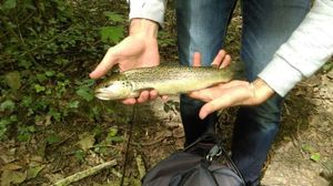 Brown Trout — Kévin Martin