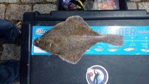 European Flounder — Thomas Crombez
