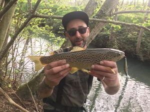 Brown Trout — Yassin Chiheb