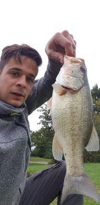 Largemouth Bass — Florent Naimud